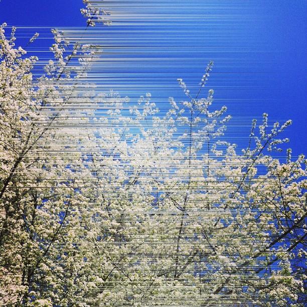 Frühlingsstreifen