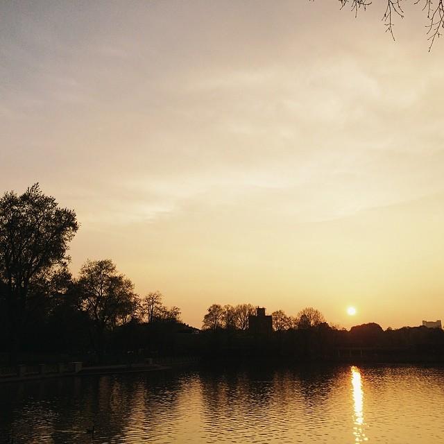 Sunset in the Park #vscocam