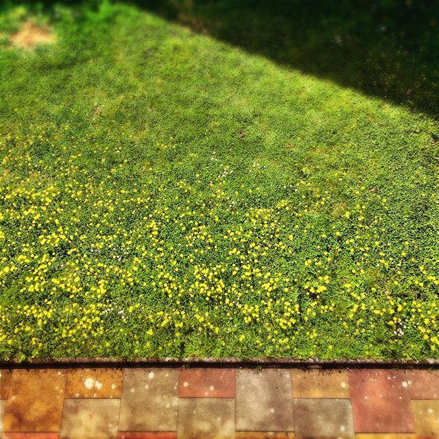 Wildflowers grün